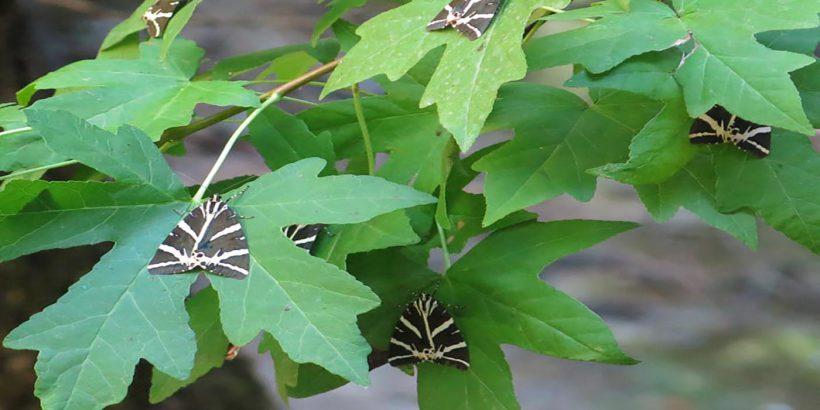 butterflies-valley